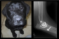 Advances in Medicine Have Gone to the Dogs