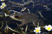 Natural History Museum Spotlights Plight Facing Utah Frogs